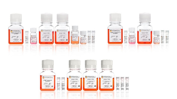 Differentiate immune cells from hPSCs with STEMdiff™ kits.