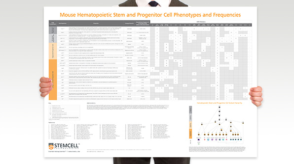This wallchart provides a handy overview of the subset hierarchy of mouse HSPCs, including their frequencies and phenotypes.