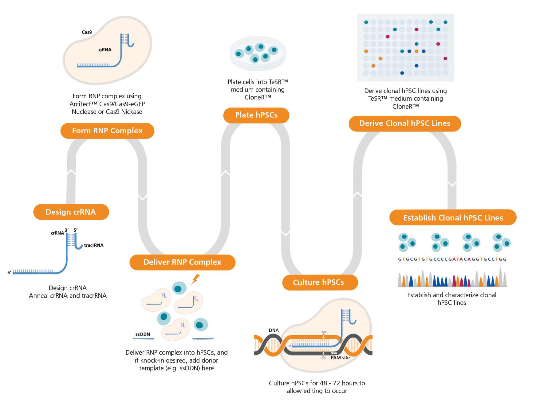 Genome Editing of Human Pluripotent Stem Cells