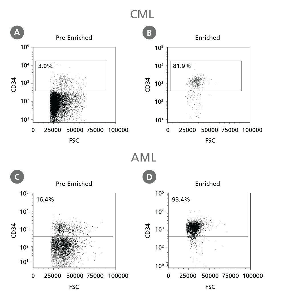 Figure 3. Isolation of CD34<sup>+</sup> CML Cells