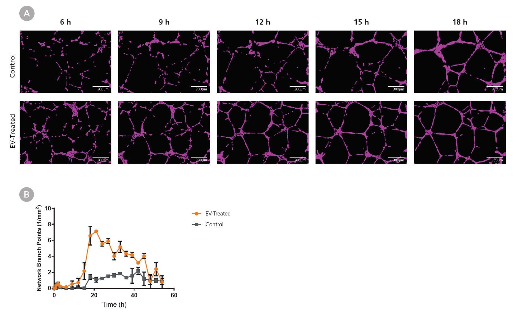 MesenCult-ACF plus for exosome derivation