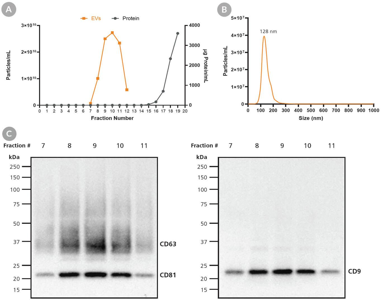 MesenCult-ACF Plus-Derived exosome cargo