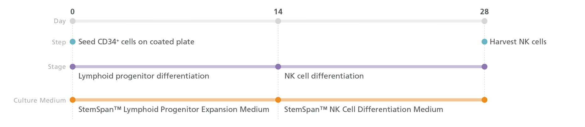 NK cell generation protocol