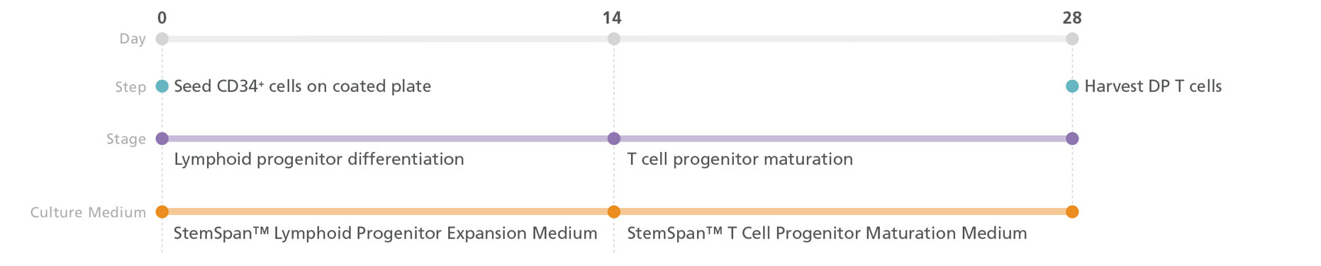 T cell generation protocol