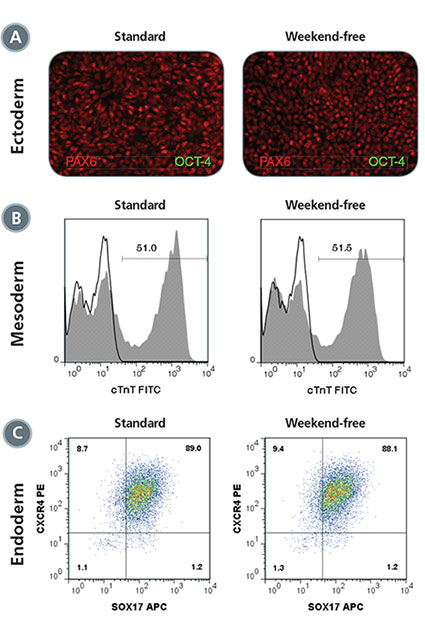 Ability to Differentiate to Three Germ Layers is Retained in Cells Cultured with the Weekend-Free Protocol