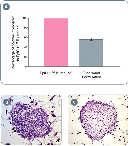EpiCult™-B Mouse Mammary Epithelial Cell Colonies