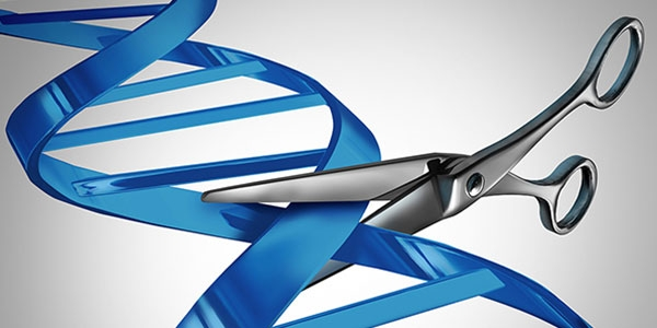 Genome Editing