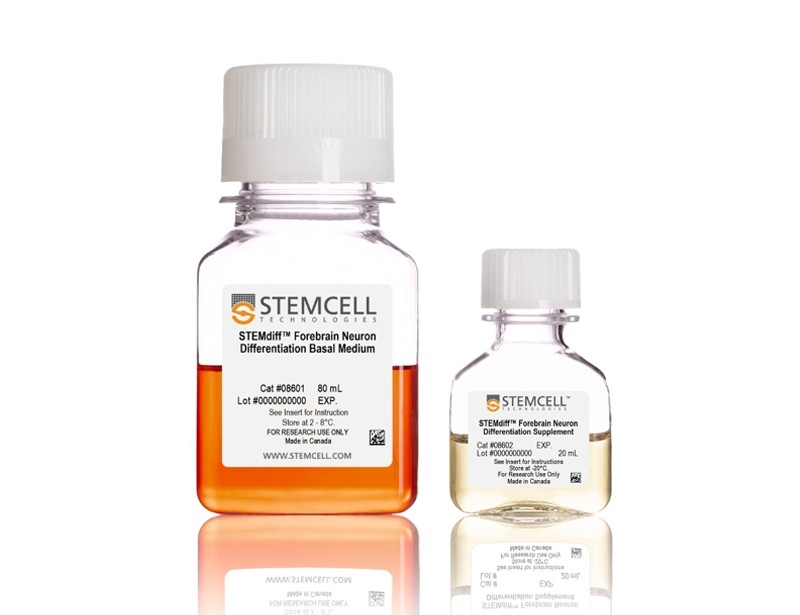 STEMdiff™ Forebrain Neuron Differentiation Kit
