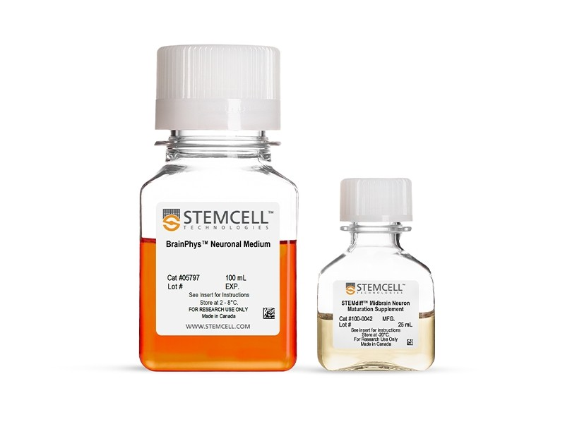STEMdiff™ Midbrain Neuron Maturation Kit