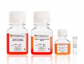 STEMdiff™ Endothelial Differentiation Kit