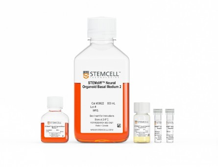 STEMdiff™ Dorsal Forebrain Organoid Differentiation Kit
