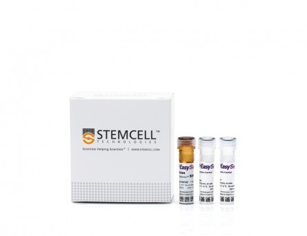 EasySep™ Human B Cell Isolation Kit|17954