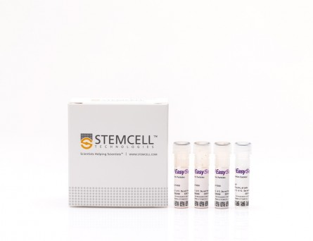 EasySep™ Human CD8+ T Cell Enrichment Kit