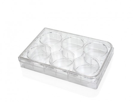Costar® 6-Well Flat-Bottom Plate, Tissue Culture-Treated