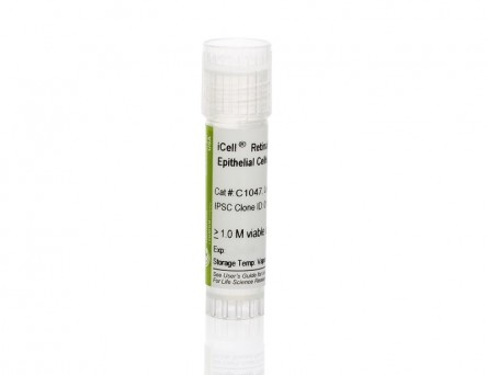 iCell® Retinal Pigment Epithelial Cells, 01279