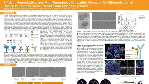 Efficient, Reproducible and High-Throughput-Compatible Protocols