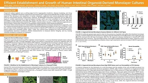 Efficient Establishment and Growth of Human Intestinal Organoid-Derived Monolayers