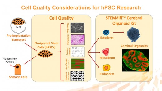 hPSC Quality: Essential Considerations for Gene Editing, Cloning, Maintenance and Disease Modeling