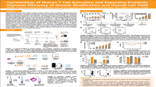 Optimization of Human T Cell Activation and Expansion Protocols Improves Efficiency of Genetic Modification and Overall Cell Yield