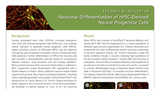 Neuronal Differentiation of hPSC-Derived Neural Progenitor Cells