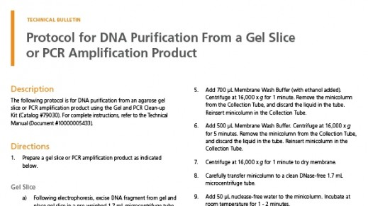 Protocol for DNA Purification From a Gel Slice or PCR Amplification Product