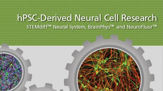 STEMdiff™ Neural System for hPSC-Based Neurological Modeling