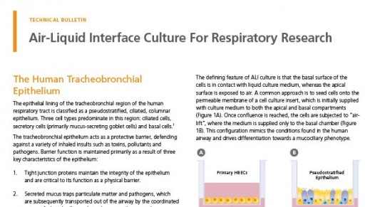 Air-Liquid Interface Culture for Respiratory Research