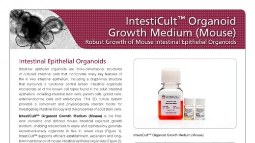 IntestiCult™ OGMM: Robust Growth of Mouse Intestinal Epithelial Organoids