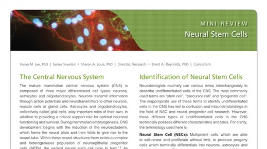 Neural Stem Cells
