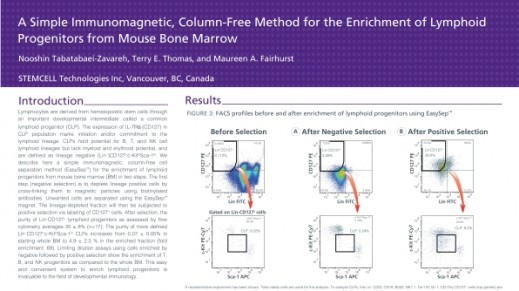 Immunomagnetic Cell Enrichment of Lymphoid Progenitors from Mouse Bone Marrow