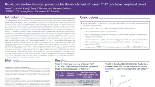 Column-Free Cell Enrichment of Human Th17 Cells from Peripheral Blood