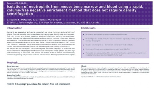 Isolation of Neutrophils from Mouse Bone Marrow and Blood Using a Rapid