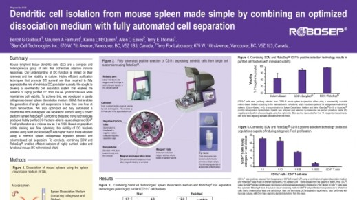 Dendritic Cell Isolation from Mouse Spleen Made Simple
