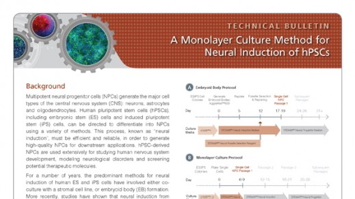 A Monolayer Culture Method for Neural Induction of hPSCs