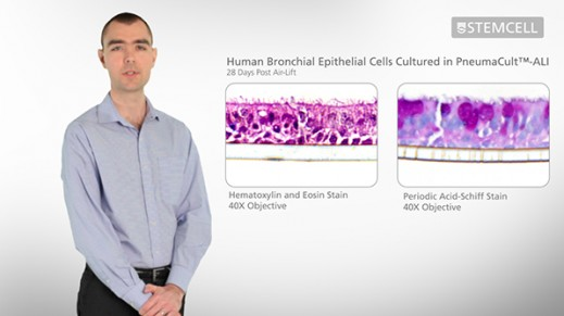 PneumaCult™-ALI Optimized Medium for Air-Liquid Interface Culture of Bronchial Epithelial Cells