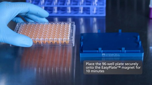 EasyPlate™ Magnet: Fast & Easy Cell Isolation in a 96-Well Plate