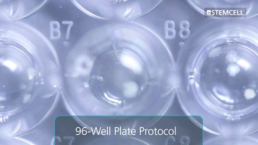 Customizable 96-Well Plate Semi-Solid Cloning Procedure for Mammalian Cells