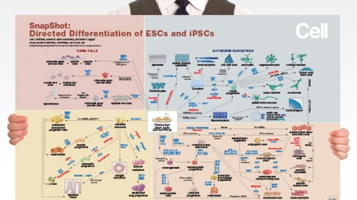 Directed Differentiation of Pluripotent Stem Cells