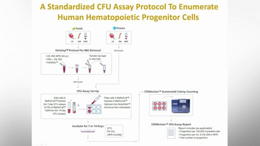 Optimization and Standardization of the Colony-Forming Unit Assay for Hematopoietic Progenitor Cells