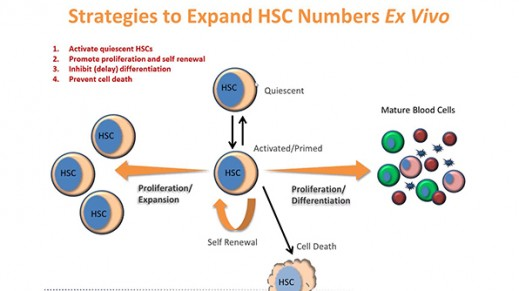 New Tools for the Ex Vivo Expansion of Human Hematopoietic Stem and Progenitor Cells