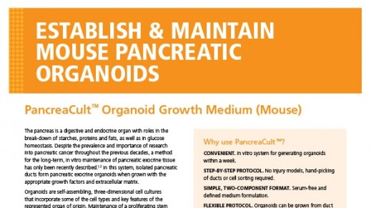 PancreaCult™ Organoid Growth Medium (Mouse)