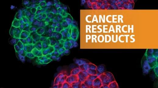 Standardized Tools for Cancer Stem Cell Research