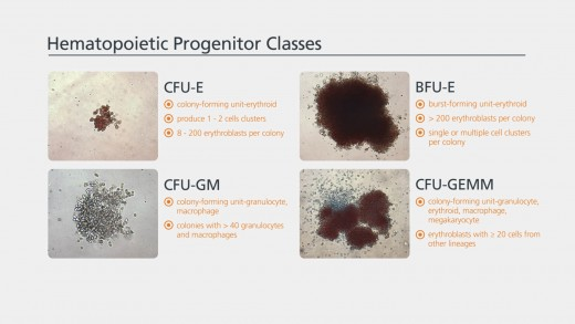 Colony Enumeration and Identification for Custom Hematopoietic Training Courses
