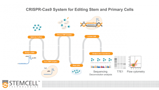 Optimized Workflows for High-Efficiency Genome Editing in Stem and Primary Cell Types