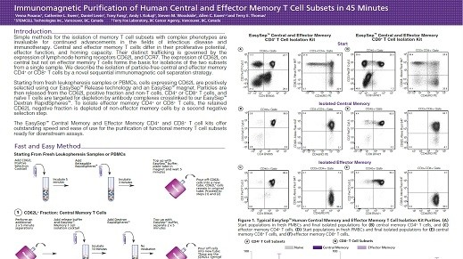 Immunomagnetic Purification of Human Central and Effector Memory T Cell Subsets in 45 Minutes
