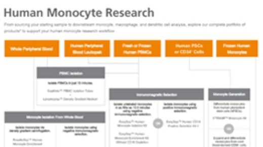 Human Monocyte Research Product Workflow