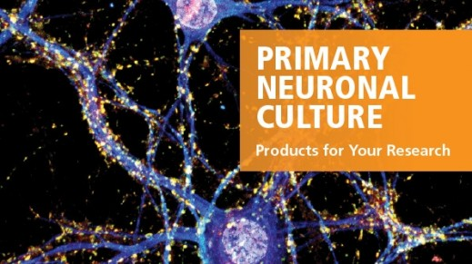 Primary Neuronal Culture: Standardized Media and Reagents
