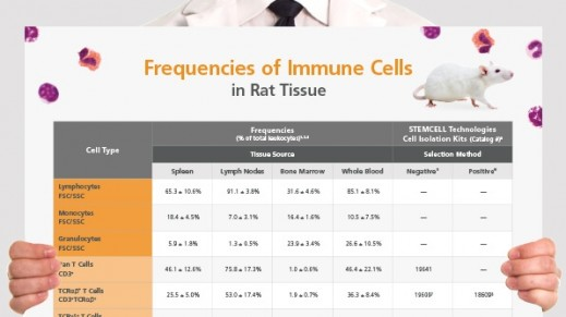 Frequencies of Immune Cells in Rat Tissue
