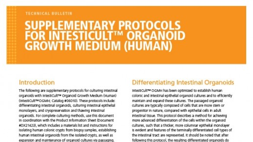 Supplementary Protocols for IntestiCult™ Organoid Growth Medium (Human)