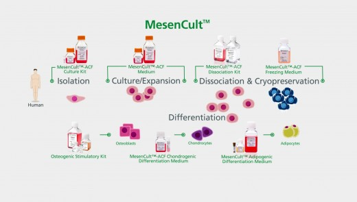MesenCult™ for Mesenchymal Stem and Progenitor Cell Isolation, Culture & Differentiation